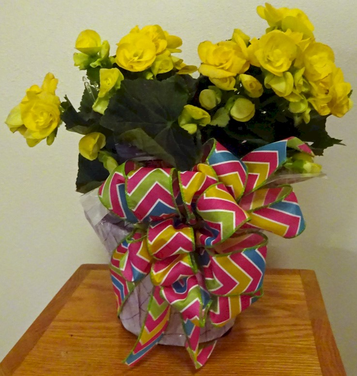 Flowers from Dan and Cindy Hauk
