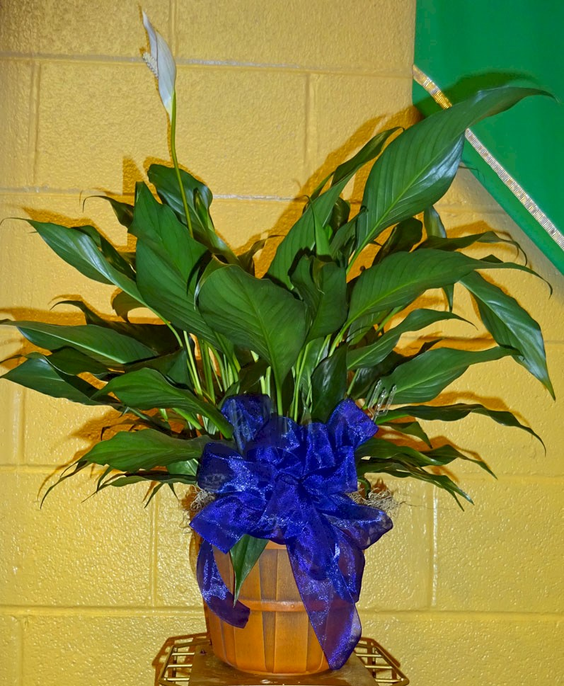 Flowers from Your friends at Stulken, Peterson, Lingle, Waltie, and Jones